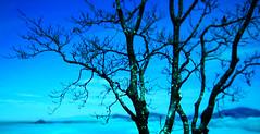 Sur le toit des penses (Dodo Veneziano) Tags: tree art nuvole cross processing dodo palermo albero pensieri sicilia erice artista fotografo domenico emozioni veneziano