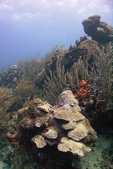 Tobago Coral Reef - Hard and Soft Corals (jd1001) Tags: underwater scuba diving tobago corals coralreef speyside seasea dx8000