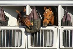 Road Trip (David K. Edwards) Tags: travel horses horse trailer slo feedbag