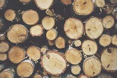 10 (BartoszJania) Tags: trees tree mobile google cut 5 harvest cellphone poland polska lg smartphone birch lollipop lge android birches nexus maopolska vsco nexus5 vscocam