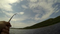 Salmon High Jump (Zircon_215) Tags: jump labrador salmon flyfishing leap hardy chesty flyreel salmosalar atlanticsalmon salmonjump pinwareriver thebigland goprocamera goprohero3 hardymarquissalmonno2