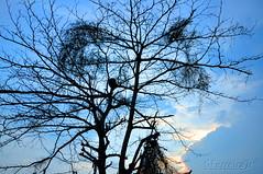 Vai florescer... (GFerreiraJr ) Tags: sunset brazil brasil nikon rj gettyimages nationalgeographic sogonalo d90 micmarayyo nikond90 flickraward nikonflickraward panoramafotogrfico touraroundtheworld flickrunitedaward sogonalorj brasilemimagens gferreirajr