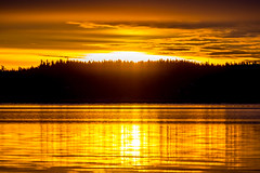 Gold (Jens Haggren) Tags: olympus em1 sky clouds water sea trees silhouettes reflections colours morning sun sunrise nacka sweden jenshaggren