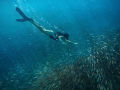 Schoolteacher (Snirk) Tags: girl underwater gopro school fish elnido miniloc philippines palawan