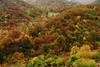 En el Pais del Oso Pardo (Mariano Aspiazu) Tags: bosques cantabria cordilleracantábrica españa landscape liebana montañas marianoaspiazu naturaleza paisaje paisajesdecantabria picosdeeuropa caloca pesaguero