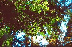 高尾山_19 (Taiwan's Riccardo) Tags: 2016 japan tokyo 135film fujifilmrdpiii transparency color plustek8200i rangefinder 日本 東京 zeissikoncontessa35 tessar fixed 45mmf28 高尾山 八王子 2016tokyovacation