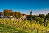Weinbergblick (berndtolksdorf1) Tags: jahreszeiten herbst sonnenschein himmel blau weinberg freyburgunstrut outdoor sachsenanhalt landscape autumn