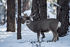 Deer (M@ H) Tags: cold deer snow tree winter animals forest stick storm weather wildlife