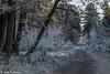 161230_007-15.jpg (Jacky Vastmans) Tags: limburg maasmechelen mechelseheide beriezen bevroren bos cold dennebomen dennen freezing frozen koud landscape landschap panorama pine sneeuw sneeuwlandschap snow snowylandscape sparren stilleven vriezen winter winterlandschap wood