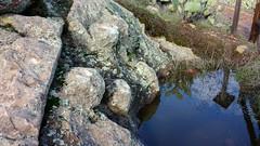 Steatite Soapstone Outcropping (Chris Hunkeler) Tags: catalina transcatalina soapstone steatite outcropping tongva santacatalina earlyislanders bulb rock quarry history historic