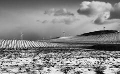 quando il bianco è bianco ed il nero è nero. (albygent Alberto Gentile) Tags: biancoenero blackwhite neve clouds campagna countryside