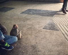 A Fleeting Touching of Hearts (Mayank Austen Soofi) Tags: delhi walla a fleeting touching hearts monkey subway connaught place