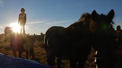 10-11-2014 Hélène Et Les Juments (Dust.....) Tags: animaux aminal animales chevaux cheval jument poulain horses horse mare colt caballos caballo yegua potro enfant enfantetcheval photodecheval