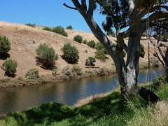 Tyre Swing by River (mikecogh) Tags: oldnoarlunga onkaparingariver bucolic tyreswing tire dry summer