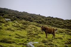 Carneddau pony (GarethBell) Tags: carneddau pony hill green grass animal wild hdr outdoors wales canon6d canon 6d north northwales