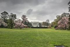2015-04-14 White House HDR (mwan333) Tags: pink white house canon cherry parents dc washington blossom lawn sakura hdr 6d
