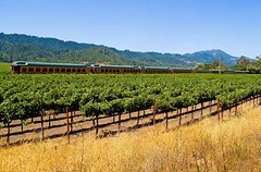4511908 (itsamazed1) Tags: california summer sky food usa sun plant mountains tree green tourism field leaves rural america train garden landscape daylight vineyard day wine reaching outdoor farm hill sonoma relaxing grow vine tourist foliage soil rows valley transportation grapes napa romantic vein growing bud lush agriculture scion northern botany grapevine winemaking slotting