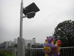 Ambipom in Kasukabe, Saitama 7 (Kasadera) Tags: toys figure pokemon pokmon  kasukabe   pokemonkids  ambipom     ambidiffel capidextre