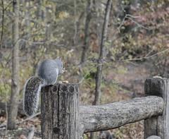 _DSC4273 (purin_cess) Tags: centralpark 2016 autumn 11月 十一月 秋 中央公園 紐約 ny newyork