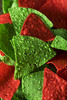 Festive Christmas Green and Red Tortilla Chips (brent.hofacker) Tags: appetizer bowl chip chips christmas christmaschips christmastortillachips cilantro colorful corn crispy crunchy cuisine delicious dip dipping ethnic festive food fresh gourmet green healthy holiday homemade lime meal mexican nacho red redandgreenchips rustic salsa sauce snack spicy tasty tomato tortilla tortillachip tortillachips traditional vegetable vegetarian xmaschips yellow