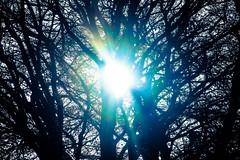 First Day of Winter (eskayfoto) Tags: canon eos 700d t5i rebel canon700d canoneos700d rebelt5i canonrebelt5i winter solstice wintersolstice sk201612215049editlr sk201612215049 lightroom firstdayofwinter season seasonal shortest day light sun solar sol shortestday december21st2016 december 21st 2016 tree cold branches flare sunshine sunlight
