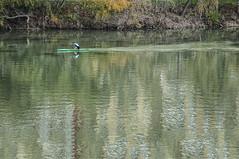 Reflejos al paso de la piragua (Rosa Tomé) Tags: río ebro zaragoza piragua agua reflejos explore