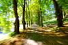 Speed (mR moRten) Tags: bergen fjøsanger grønn morten rød veg grus fart tre