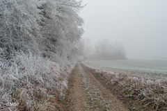 The day after tomorrow (MNP[FR]) Tags: field landscape fog frozen winter cold europe france countryside gel samsung hiver paysage froid givre champs oise brouillard picardie campagne nx1