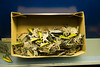 A whole box of tin soldiers (quinet) Tags: 2016 berlin germany museumofberlin spielzeug zinnfiguren jouets toy