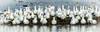 _MG_3858 Ross Geese (Lubeck Photography) Tags: geese winter wildlife birds san joaquin valley audubon