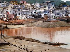 Pushkar sacred lake (VinZo0) Tags: india travel world voyage people street rue lac lake sacred exterieur couleur city spirit birds colors brown ngc