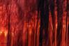 Blaze at Dawn (skip2molou) Tags: intentionalcameramovement fire dawn