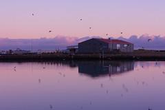 Boathouse (joshuadavidreid) Tags: hofn harbour pink sky cloud birds reflection boathouse