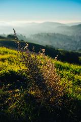 Burs (Graham Gibson) Tags: sigma dp2 merrill foveon orinda hills