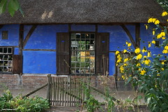 Farm house (Ineke Klaassen) Tags: openluchtmuseum arnhem farm dutch holland nederland museum building buildings gebouw gebouwen boerderij oud blue blauw balken beams thatched roof rieten dak oudhollands nederlandvandaag historic historisch pand farms farmhouse farmhouses traditional old vroeger throwback olddays sony 6000 alpha images photography fotografie fotografía farmstead farmyard netherlands thenetherlands europe europa