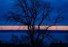 Sunset and tree (frankmh) Tags: sunset tree blue sky hittarp helsingborg skåne sweden öresund denmark outdoor