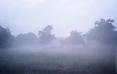 Mystical grounds... (dksesh) Tags: trees wild plants reed nature grass walking freshair sony reserve fitness twigs bushes barnes seshadri sesh harita naturewalking sonyxperia dhanakoti haritasya seshfamily sonyxperiaz2 barnesnature