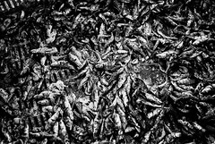 MIM : Still life | Nature morte (galibert olivier) Tags: horse french caballo cheval frankreich noir south kultur working culture frana bull travail sur frans frankrijk tradition pastor et francia cavalo blanc pferd toro tool franais flamenco cultura sul trabalho laboral sud cultuur sevillanas  paard touro tradicin francs franzsisch  hirt arbeiten taureau francs stier ferramenta tradio sden herramienta surraliste werkzeug outil  herdsman werkend gereedschap traditie gardian zuiden  sevillane   veehoeder