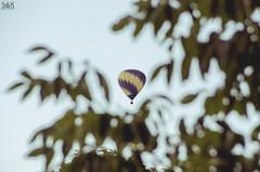 177/365 (yo·soy·jav!) Tags: above sky tree up leaves digital fly flying high nikon midwest pretty dof balloon floating iowa outoffocus depthoffield hotairballoon 365 dslr distance far faraway cedarrapids easterniowa project365 d7000 clubd7000