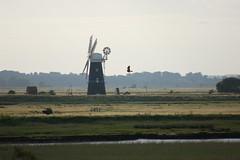 Berney Arms Mill and a Marsh Harrier (Kirkleyjohn) Tags: norfolk marshes norfolkbroads burghcastle riveryare marshharrier riverwaveney berneyarmsmill norfolkcountryside