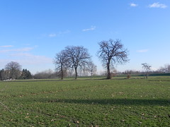 DSCN7614 (Gianluigi Roda / Photographer) Tags: lateautumn earlywinter december 2011 countryside trees landscapes