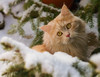 Sweet innocence (FocusPocus Photography) Tags: linus katze kater cat chat gato tier animal haustier pet schnee snow winter