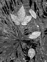 (Landanna) Tags: nature natur natuur black bw white wit zwart zw sort hvid abstract