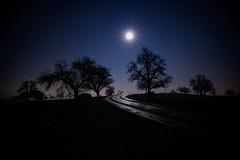 Under the Star (yarin.asanth) Tags: xmas yarinasanth gerdkozik moonlight road shadow silhouette trees smalltown hill nightshot landscape december cold inter moon light blue night fullmoon