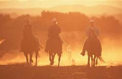 Cowboy, Quarter Horse , Equus przewalskii f. caballus, domestic horse (lotharlenz) Tags: cowboy sonneuntergang sauber qh quarterhorse reiten caballo cavalo cheval equus häst hest hestur hobu horse konj paard pferd zirgs