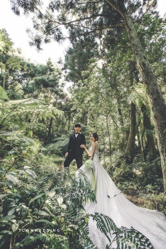 陽明山擎天岡,海邊,陽明山黑森林