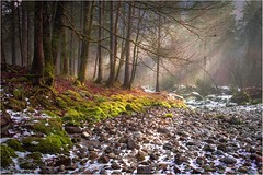 Cry me a river (Singflow) Tags: river bluntau winter dry snow singflow sun light beam stone tree forest back landscape