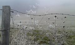 Christian Morgenstern sagt: (ღ eulenbilder - berti ღ) Tags: wiese zaun winter rauhreif kalt weiss der kälte