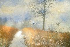 Saturday's Frost (floralgal) Tags: marshlandsconservancyryenewyork newyorklandscape ryenewyork winterinryenewyork snowscene nature naturepreserve wetlands woodlands marsh dove painterlylandscape westchestercountynewyork