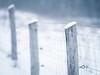 Winter fence - HFF! (A_Peach) Tags: samyang samyang85mmf14 winter fence hff manualfocus mft m43 lumix panasonic microfourthird micro43 apeach anjapietsch dof bokeh snow white desaturated cold